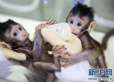 揭秘克隆猴:从多利羊到中中猴 为何用了21年