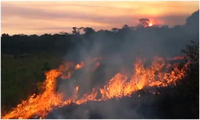 亚马逊雨林火灾仍在肆虐 地球之肺在燃烧创纪录