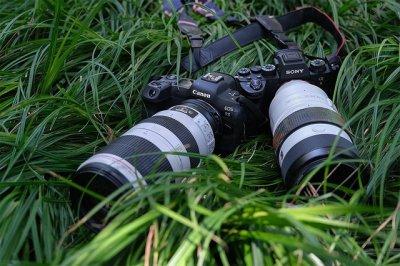 巅峰对决!EOS R5、A9 II谁是生态摄影利器?